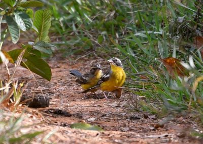 Breeding pair on the path